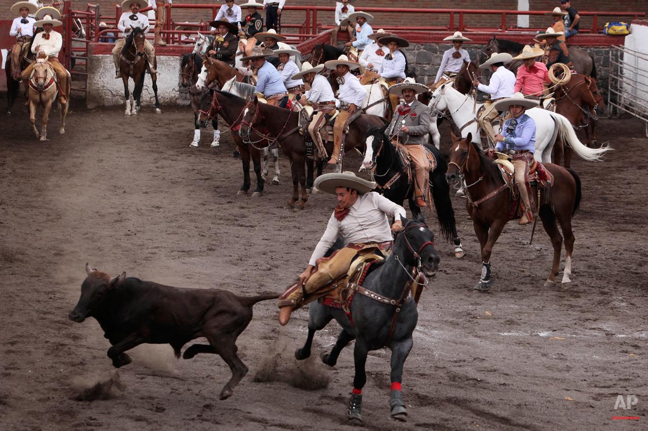 Mexico Charro Horses Photo Gallery